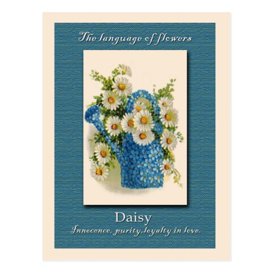 The Meaning of the Daisy Postcard