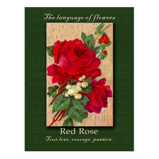 The Meaning of the Red Rose Postcard
