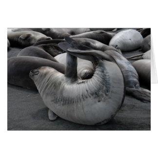 The Mermaid Seal Card
