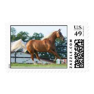 The Midas Touch Postage