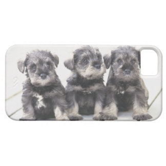 The Miniature Schnauzer is a breed of small dog iPhone SE/5/5s Case