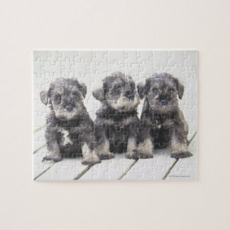 The Miniature Schnauzer is a breed of small dog Jigsaw Puzzle