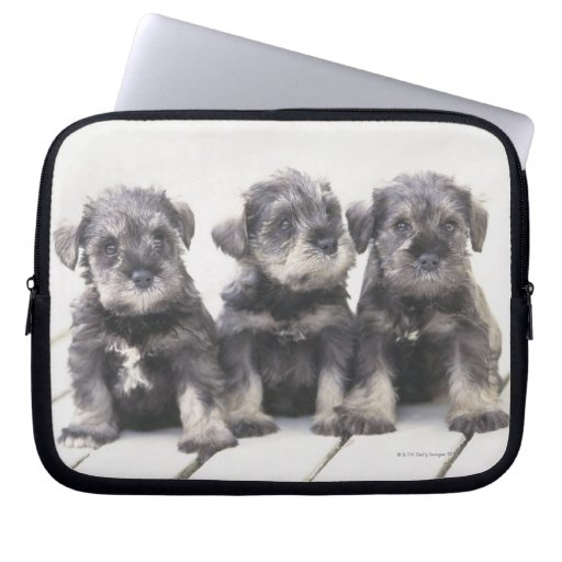 The Miniature Schnauzer is a breed of small dog Laptop Computer Sleeves