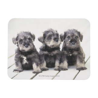 The Miniature Schnauzer is a breed of small dog Rectangular Photo Magnet