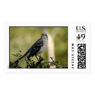 The Mockingbird Postage
