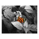 The Monarch Photo Print