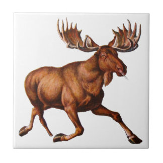 THE MOOSE IS LOOSE TILE