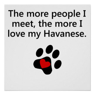 The More I Love My Havanese Posters