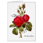 The Moss Rose - Vintage Fine Art Card