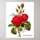 The Moss Rose - Vintage Fine Art Poster