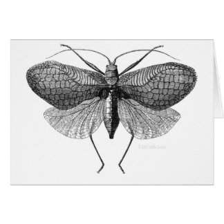 The Moth Man Prophesy Card
