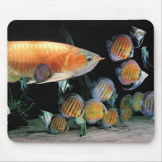 The mouse pad of Asian Arowana and Discus fish
