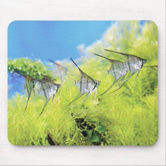 The mouse pad of FRESH Water Angellfish, No.01