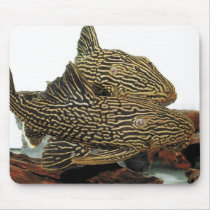 The mouse pad of Golden Royal Pleco
