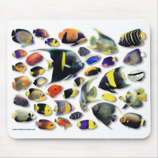 The mouse pad of Marine angelfish