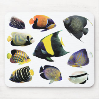 The mouse pad of Marine Angelfish, No.02