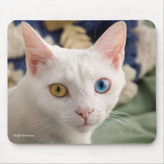 The mouse pad of Odd-eyed-cat