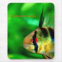The mouse pad of Papiliochromis ramirezi