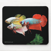 The mouse pad of Pla kat