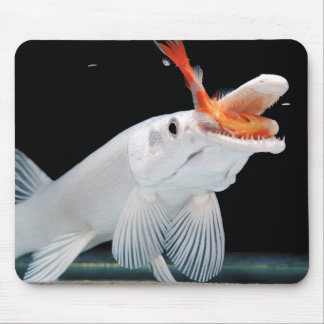 The mouse pad of Platinum Alligator Gar