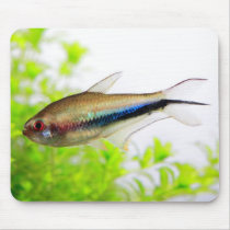 The mouse pad of Rainbow tetra