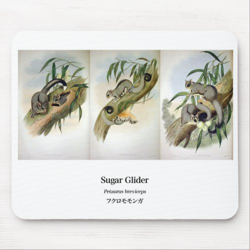 "sugar gliders exotic pets"", No.01"