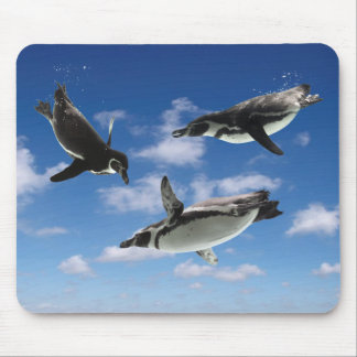 The mouse pad of the penguin which flies through t