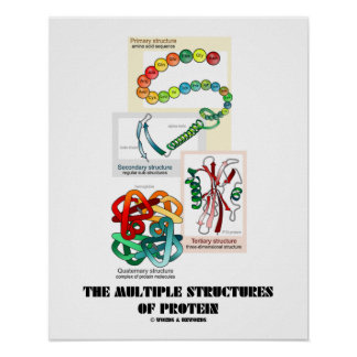 The Multiple Structures Of Protein (Biology) Poster