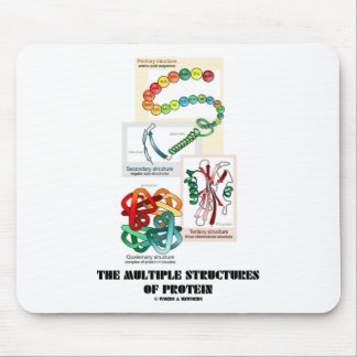 The Multiple Structures Of Protein Mouse Pad