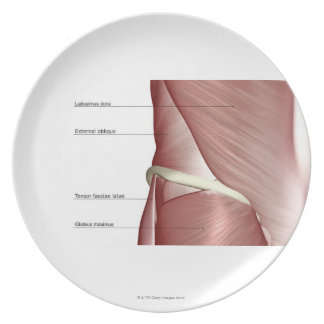 The muscles of the lower body melamine plate