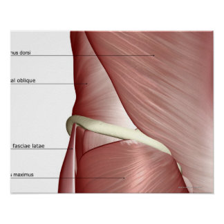 The muscles of the lower body poster