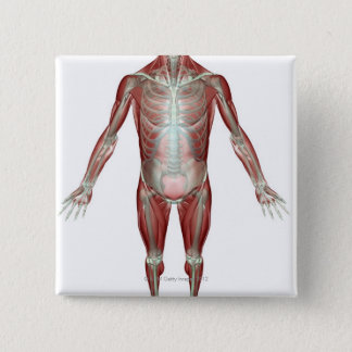The Musculoskeletal System 10 Button
