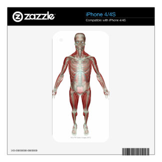The Musculoskeletal System 10 iPhone 4S Decals
