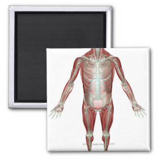 The Musculoskeletal System 10 Magnet