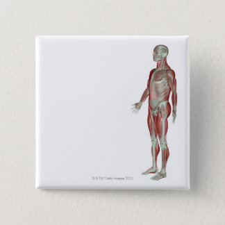 The Musculoskeletal System 11 Button