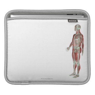 The Musculoskeletal System 11 iPad Sleeves