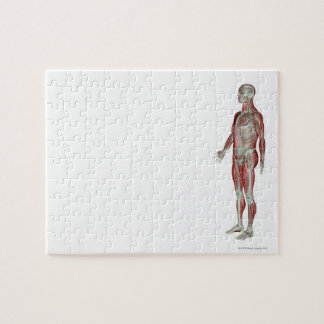 The Musculoskeletal System 11 Jigsaw Puzzle
