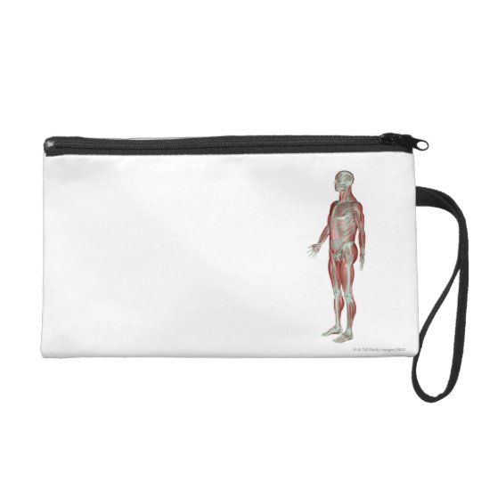 The Musculoskeletal System 11 Wristlet Purse