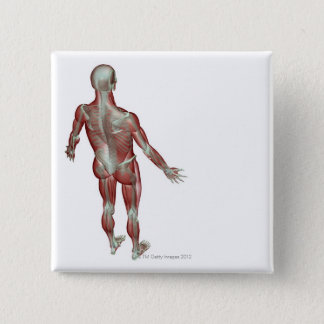 The Musculoskeletal System 12 Pinback Button