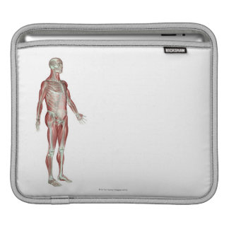 The Musculoskeletal System 13 iPad Sleeves