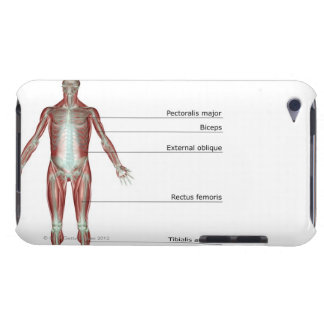 The Musculoskeletal System 2 iPod Touch Case
