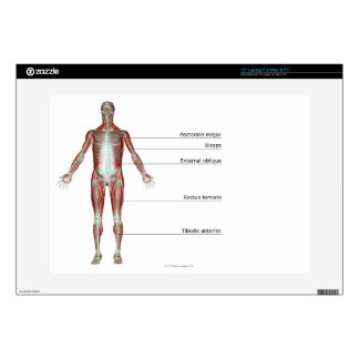 The Musculoskeletal System 2 Laptop Skin