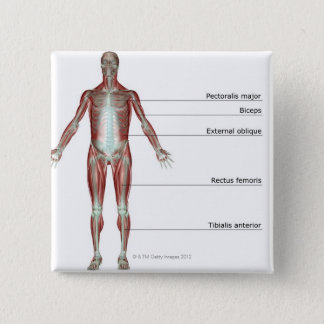 The Musculoskeletal System 2 Pinback Button