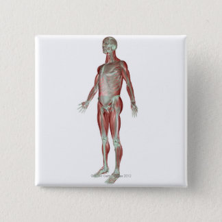The Musculoskeletal System 3 Button
