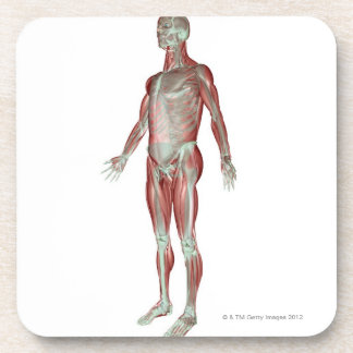 The Musculoskeletal System 3 Drink Coasters