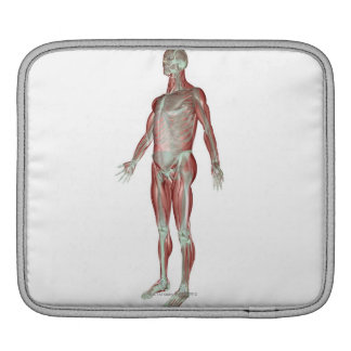 The Musculoskeletal System 3 iPad Sleeve