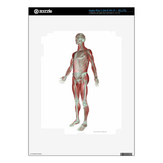 The Musculoskeletal System 3 iPad 3 Skin