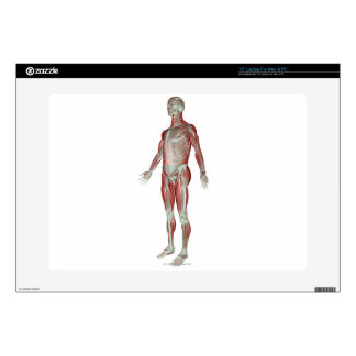 The Musculoskeletal System 3 Skin For Laptop