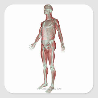 The Musculoskeletal System 3 Square Sticker