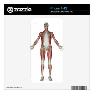 The Musculoskeletal System 4 Decal For iPhone 4
